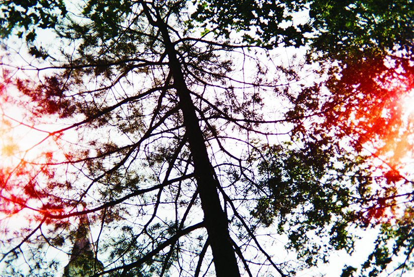 A minaret peeks out of the bottom left corner of the frame sheltered by thin branches of a taller, towering tree. Shot from the perspective of one looking up at the sky.